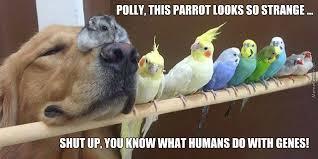 Parrot Meme - g m o parrot by rakac meme center