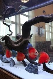 Wohnzimmertisch Aquarium Best Freshwater Aquarium Fish For Custom Tank Designs Discus