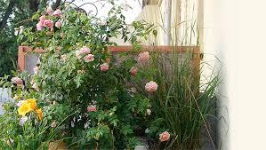 winterharte pflanzen balkon winterharte balkonpflanzen