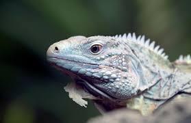 updates bronx zoo