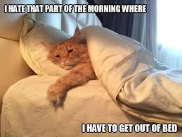 Get Out Of Bed Meme - where to find maine coon kittens for sale cat animal and kitty