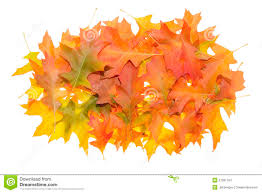 pile of oak leaves in autumn stock images image 27081784
