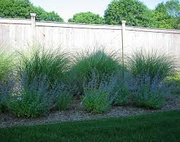 love the maiden grass along a fence possible back yard endeavor