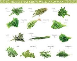 best 20 herb planters ideas on pinterest growing herbs best 20 herb planters ideas on pinterest growing herbs medicinal