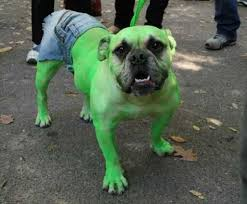 Halloween Costumes Bulldogs 7 Creepy Halloween Costumes Dog Realitypod
