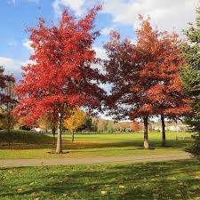 urban tree guide city of kelowna