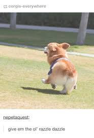 give it to them corgi the ol razzle dazzle know your meme