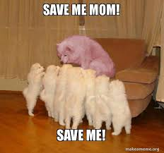 Save Me Meme - save me mom save me dogs today make a meme