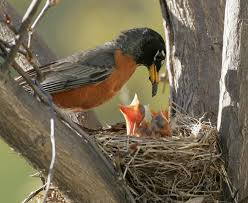 Arkansas birds images Go native for birds audubon arkansas jpg
