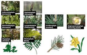 bryophytes ohio plants