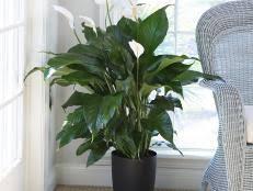 common houseplants and best indoor plants hgtv