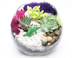 succulent terrarium at k o u0027donnell u0027s scottsdale events