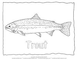rainbow trout image color 3 trout coloring trout
