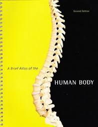 Fundamentals Of Anatomy And Physiology Third Edition Study Guide Answers Human Anatomy U0026 Physiology By Elaine N Marieb