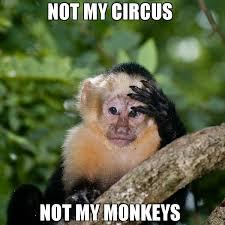 Meme Monkey - not my circus not my monkeys meme monkey face palm 67749
