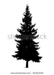 pine tree silhouette stock images royalty free images vectors