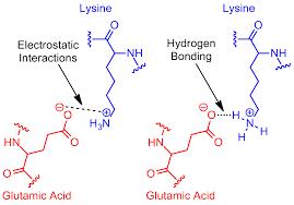 salt bridge protein and supramolecular wikipedia