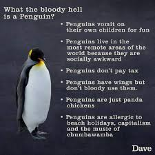 Peguin Meme - what the socially awkward penguin meme is based on imgur