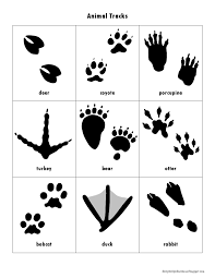 animal tracks book great idea i u0027ve been wanting to make one for