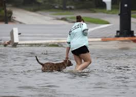 how to support animal shelters during hurricane harvey