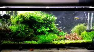 10 gallon planted tank led lighting the planted tank forum view single post a journey into high tech