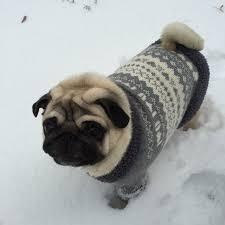 pug sweater sweater knit sweater clothing for pug coat pug