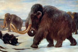 scientists hoped cloned living woolly mammoth