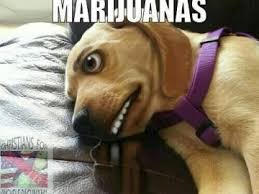 Injecting Marijuanas Meme - marijuana memes page 77 of 139 get high and think of memes