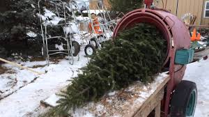 shaking baling a christmas tree at bremer u0027s tree farm youtube