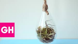 how to make a hanging air plant terrarium gh youtube