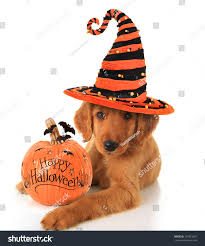 cute halloween puppy pumpkin stock photo 157015301 shutterstock