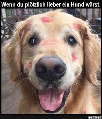 lustige hundesprüche besten bilder und sprüche und es kommen täglich neue