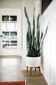 Challenge Plant Pot One Room Challenge Snake Plant Snake And Planters