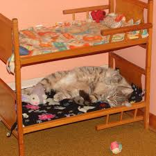 Doggie Bunk Beds Pet Bunk Bed Diy Simple Cat Bunk Beds With Diy Project Designs