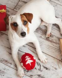black friday dog toys this black friday save 25 on toys and more at wag n u0027 wash wag