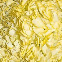 Bulk Flowers Online Hydrangea Bridal Pink 15 Stems Hydrangea Flower Ideas And