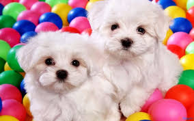 Cute Wallpapers For Kids Dog And Puppy Puzzle For Kids Android Apps On Google Play