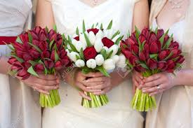 Tulip Bouquets Bride And Bridesmaids Holding Red Tulip Wedding Bouquets Stock