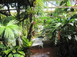 gardening great tropical houses in urban environment wit small