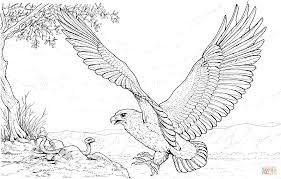 eagle attacking snake coloring free printable coloring pages