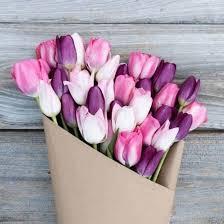 tulip bouquets knockout pink purple mixed tulip bouquet the bouqs co