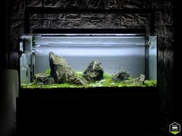 Aquascape Environmental 195 Best Aquascape Images On Pinterest Aquarium Ideas Aquarium