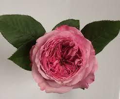rose color study flirty fleurs the florist blog inspiration