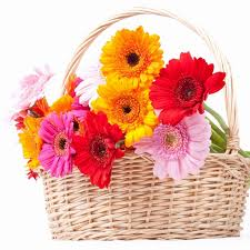 cheap flowers free delivery best flower delivery work wallpaper