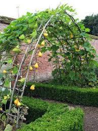 Vertical Garden Trellis - hola elena no te pierdas estos pines eolivares15 gmail com