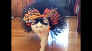 cat costume for halloween cat dressed as butterfly ready for halloween youtube