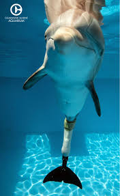 best 25 dolphin tale ideas on pinterest dolphin tale 2 the