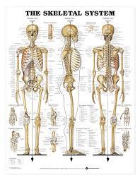 Anatomy Of A Foot Anatomy Of Bones In Human Skeleton Diagram Human Anatomy Anatomy