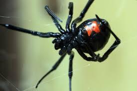 10 ways to detect and treat spider bites wellness us news