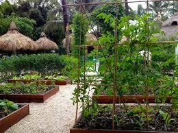beautiful vegetable gardening in south florida summer gardening in